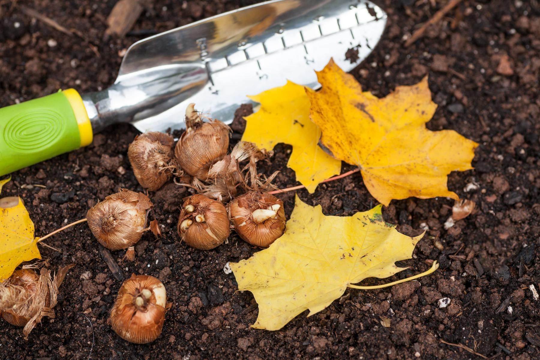 Blog_Fall_Bulbs_small