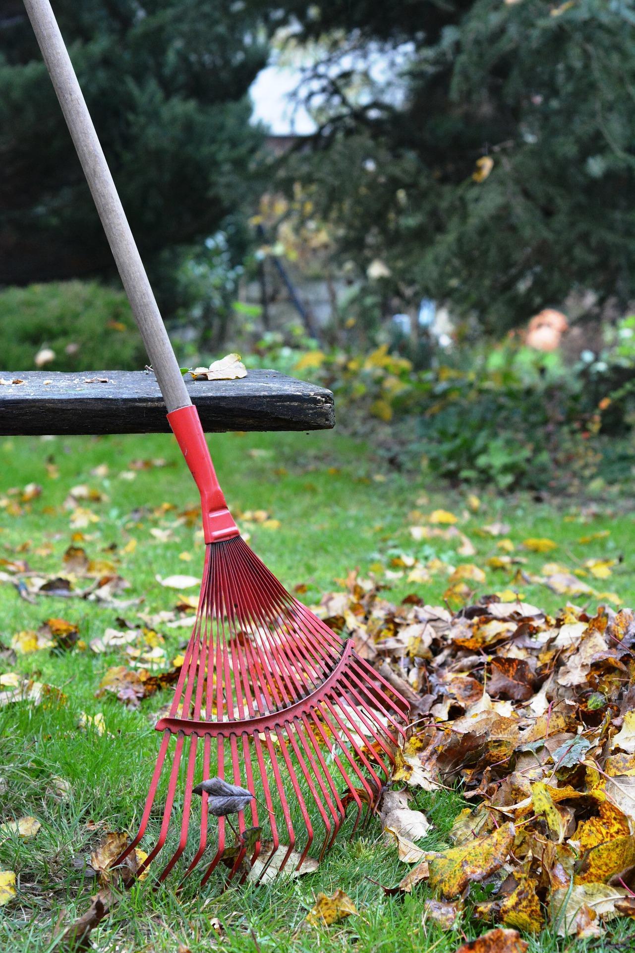 Fall Clean Up Rake