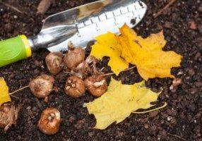 Blog_Fall_Bulbs_small